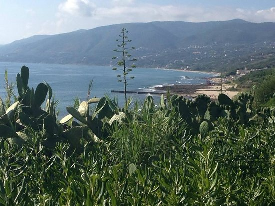 Villaggio degli Olivi: View from the restaurant
