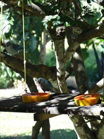 Casa Batsu: Lots of birds in the garden