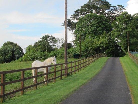 Maranatha Country House : Entry drive and horse