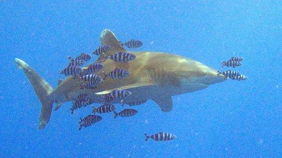 Eazy Divers: Longimanus