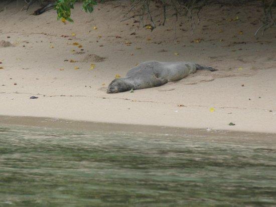 Shaka Kayaks: Monk Seal