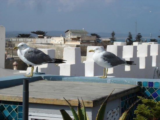 Riad Al Zahia: The rooftop terrace