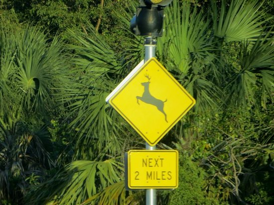 The Overseas Highway : Caution - Key Deer