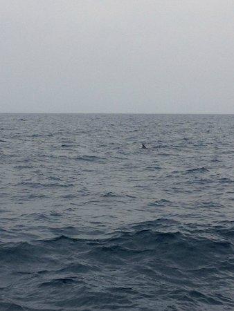 Dar Khayam Hotel: Dolphin in sea on boat trip