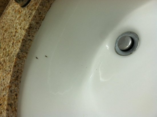 Eurotel Inn: Bugs in sink (room 131)