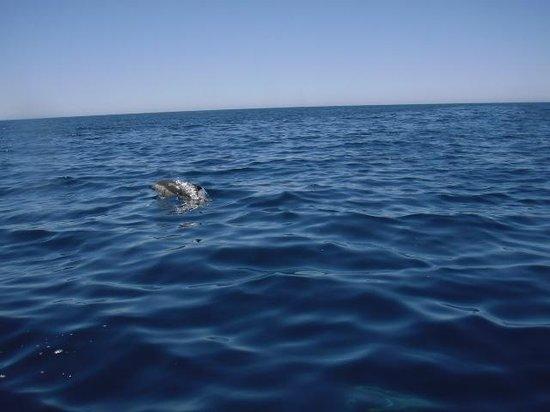 Dolphins Driven : dolfijnen spotten