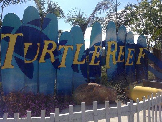 SeaWorld San Diego : Turtle reef