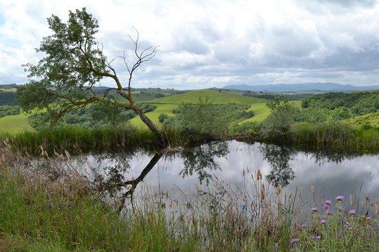 Fattoria Barbialla Nuova: Pond by Le Trosce