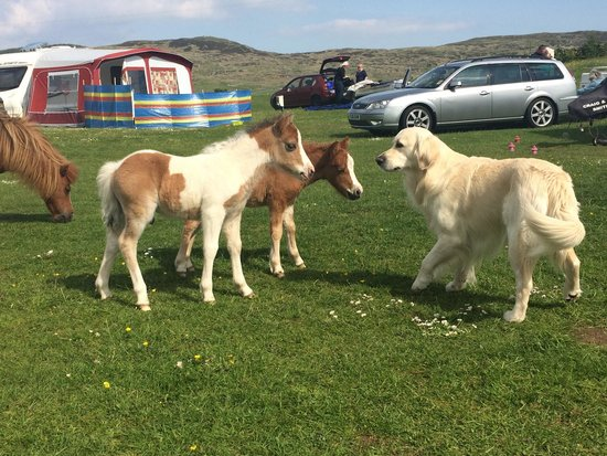 Balloch O' Dee Campsite: Our dog making friends with the resident baby ponies