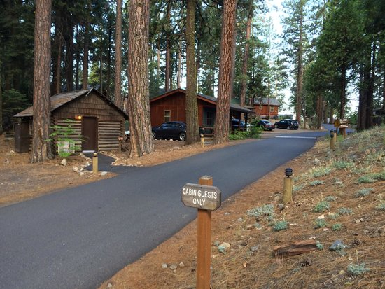 Evergreen Lodge at Yosemite: General view of the grounds/cabins immediately behind Reception