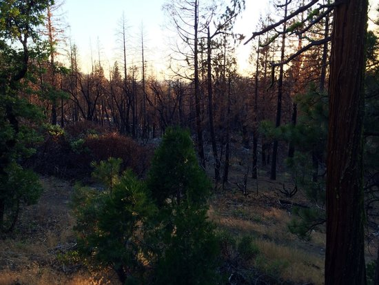 Evergreen Lodge at Yosemite: Looking west from Cedar 10 at the fire damage from 2013.