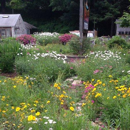Hidden Valley Motel: Gardens