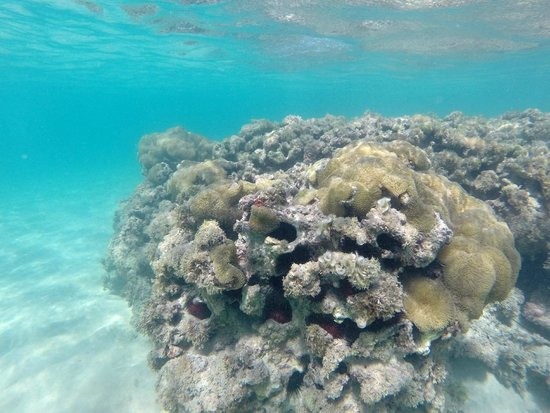 Zoetry Agua Punta Cana: Snorkeling right off of the shore.