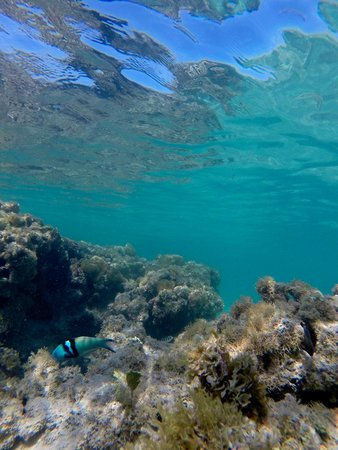 Zoetry Agua Punta Cana: Snorkeling!