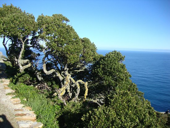Cape of Good Hope: Cape 3