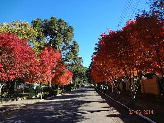 Serra Gaúcha Vip Turismo: As cores do Outono nas ruas de Gramado.
