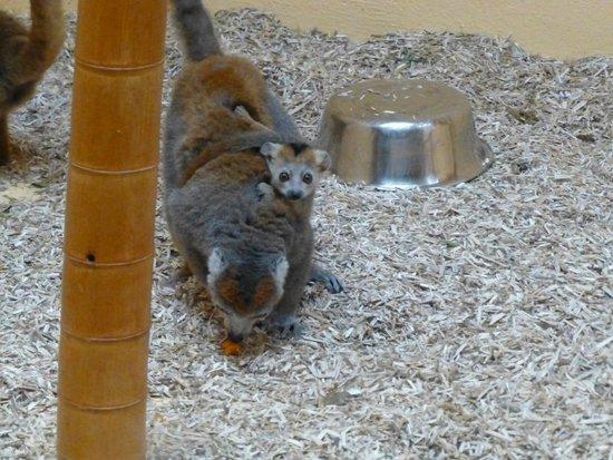 Parc Zoologique Henri de Lunaret : Zoo et serres de Montpellier