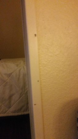 Crossland Phoenix - Metro - Black Canyon Highway: Just 3 of the many bugs in my room