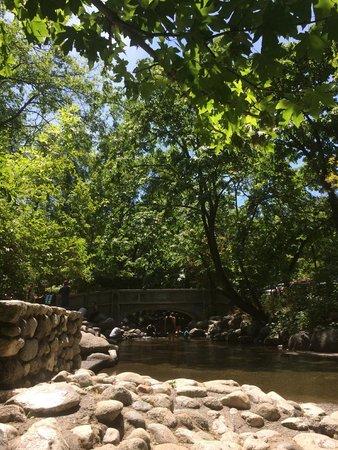 Lithia Park: Creek