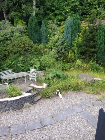 Coed Mawr Hall Bed & Breakfast: Back garden (with ducks)