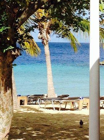 Blue Bay Curacao : blue bay beach