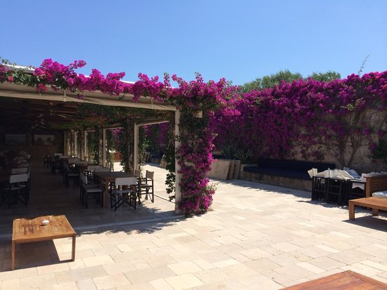 Masseria Torre Maizza : Outside bar