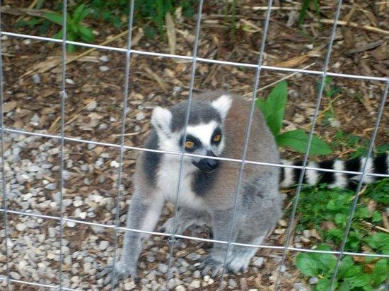 Kentucky Down Under Adventure Zoo: Awww!