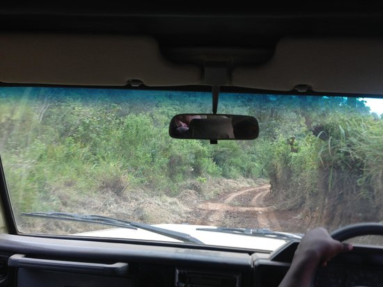 Crater Forest Tented Camp: The long, bumpy (adventurous) road to Crater Forest