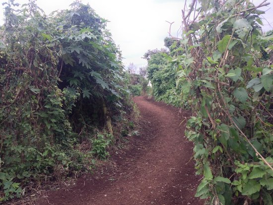 Crater Forest Tented Camp: Walkways are lined with lovely greenery