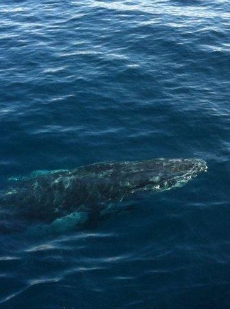Sea World Whale Watch: So close!