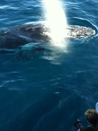Sea World Whale Watch: Amazing whales.
