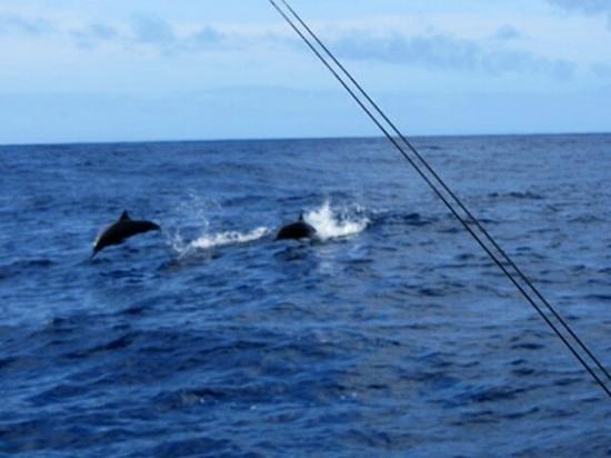 JC's Sportfishing: dolphins