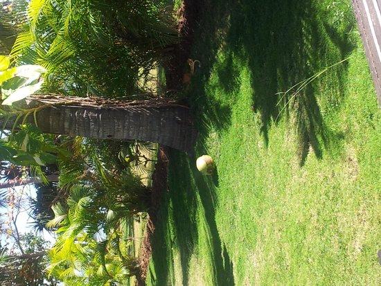 Lomani Island Resort: Garden