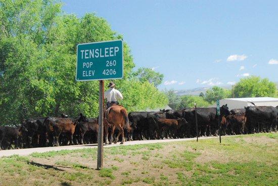 Ten Broek RV Park & Cabins & Horse Hotel: Cattle drive down Main Street
