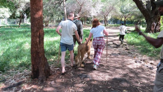 Merville Beach Hotel: Walking with lions
