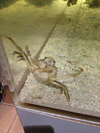 Clearwater Marine Aquarium : crab