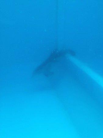 Clearwater Marine Aquarium : Winter