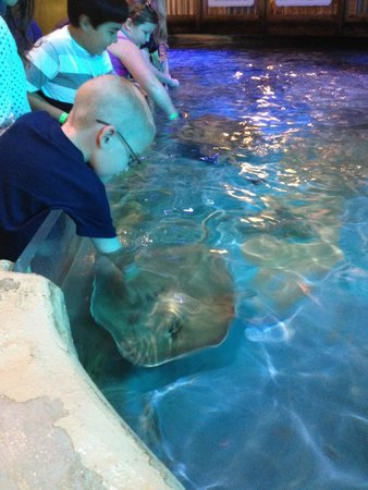 Clearwater Marine Aquarium : patting stingrays who seemed to love attention