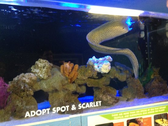 Wonderful To See Picture Of Clearwater Marine Aquarium Clearwater Tripadvisor