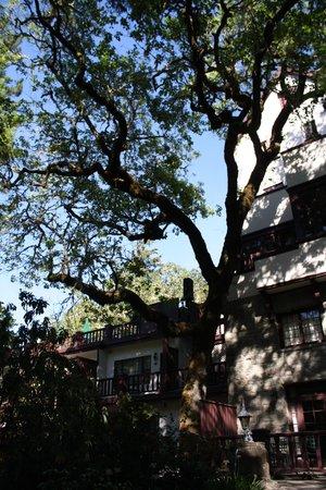 Benbow Historic Inn: beautiful oak trees