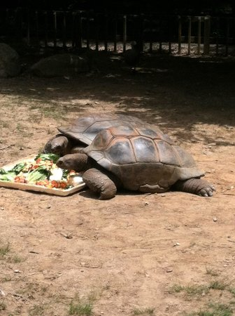 Zoo Atlanta : Giant turtles