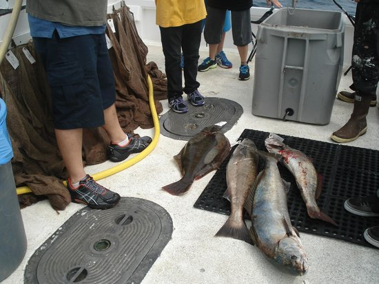 Channel Islands Harbor : Some of the big ones caught