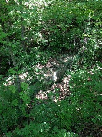 Castlewood State Park : Old stone steps