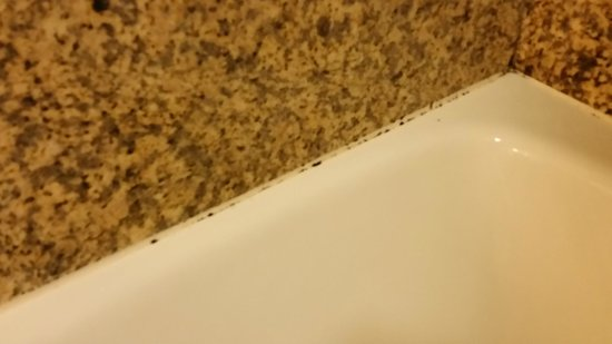 Coastview Inn: Mold around bathtub