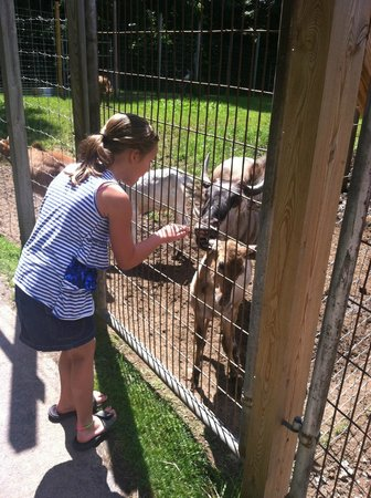 Jamestown, PA: You can up close and personal with the animals