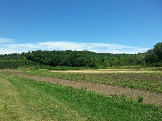 Cider Hill Farm: Fields!