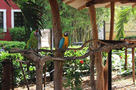 Sandos Caracol Eco Resort : Parrots by snack bar