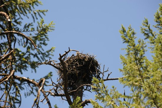 McArthur-Burney Falls Memorial State Park: Eagles Nest