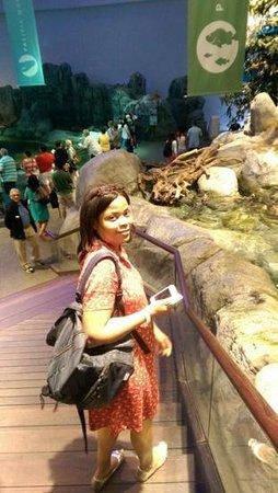 Shedd Aquarium: selfie