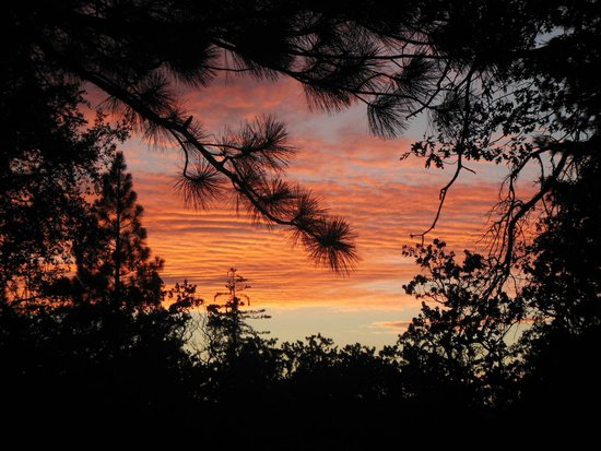 Mount San Jacinto State Park and Wilderness : Stone Creek Campground Sunset - looking up through the trees